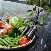 料理には自家栽培の野菜を使用しています。