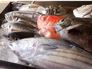 海に近いので地魚の鮮度は抜群です!