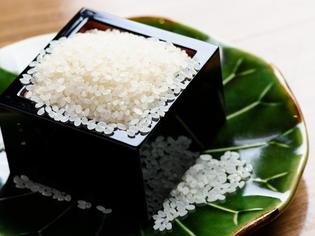 コシヒカリを父に持つお米「ヒノヒカリ」