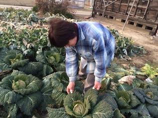 安心安全で新鮮。顔の見える元気な野菜を届ける