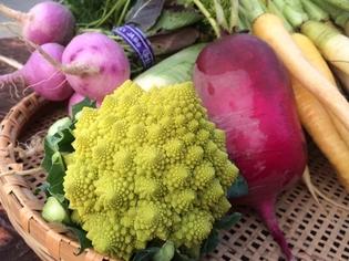 すべて露地で元気な野菜作りを心がけています