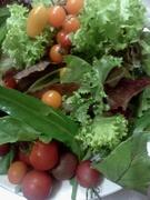 有機栽培の朝採り野菜