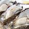 夏は大ぶりの厚岸産牡蠣が最高に美味です!