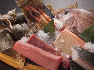 新鮮な魚介類を毎日、仕入れています