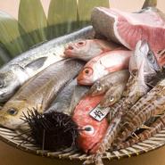 刺身や煮付けをはじめ、一匹ごとに塩梅を調整する『一夜干し』など、多彩な鮮魚料理が味わえます。