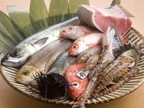 魚のおいしさと鮮度にこだわりあり!