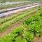 糸島の自家菜園でシェフ自らが育てた無農薬野菜を使用しています