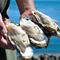 期間限定!殻いっぱいに詰まった石巻産の特大牡蠣に舌鼓!