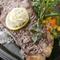 ソースが自慢! A4級の国産黒毛和牛サーロインステーキ(200g)