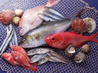 お酒に合う貝類や地中海料理でメジャーな魚は鮮度の良いものを