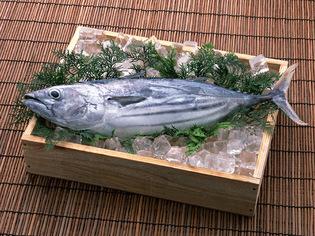 新鮮な魚や肉を厳選して仕入れ、丁寧に仕込みをしています