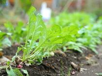 自然の恵みあふれる自家栽培野菜をすべての料理に使用