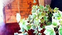 ワイン樽と植物