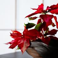 インテリアがシンプルな分、花や器などのソフト部分で季節感を演出します。花器も店主厳選の銘品。