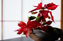 シンプルな店内を季節の花が彩る