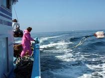 平敏丸のしらす船びき網漁