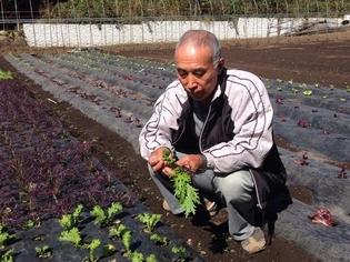 農薬代わりの植物性自然肥料で、野菜本来のおいしさを育む