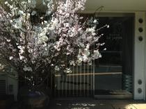 桜の季節には・・・