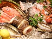 安芸茶寮では、常設メニューには載せられない、今だけの旬のお料理の数々を毎日更新。その日水槽に入ったおすすめ活魚のご紹介はもちろん、季節の旬を彩る料理人のアイデアの詰まった美しい創作料理の数々も多数。