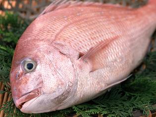 瀬戸内海の激しい潮流で身が引き締まった「鯛」などの地場食材