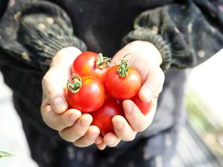 生産者と深いつながりを持つ、山形県産の食材