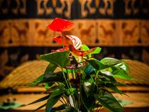 バリ島の装飾品や緑豊かな植物で、店の雰囲気作りも大切に
