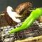 豊かな四季の味わいがちりばめられた『京野菜のおばんざい』