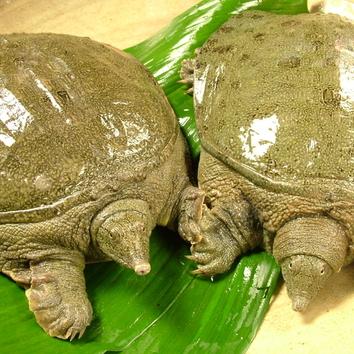 夏の京野菜と鱧懐石 【高雄】 通常10000円が7000円