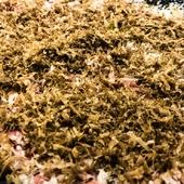 熟成近江牛モモ肉のしゃぶしゃぶカルパッチョ仕立て、トリュフ風味