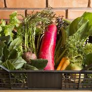 今は良い生産者さんがたくさんいますので、同じ品種のものでも、より深く食材の個性を知るように心がけています。埼玉の増田農園をはじめ北海道のやぶ田ファームなどから届けられるチカラのある野菜を使っています。