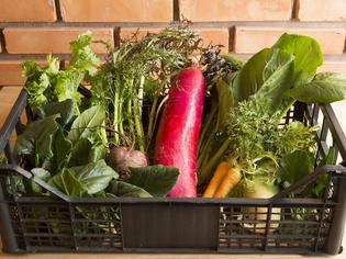 生産地に足を運び、個性を理解した食材を厳選しています