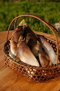 4月~5月にかけて旬の筍! 当店では京都大原野の朝堀りの筍を使用しております! 刺身、天ぷら、若竹煮など様々な召し上がり方をお楽しみ下さい。