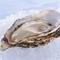 広島の味覚を味わえる『広島三昧コース』