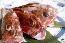 「ガシラ」日本の近海で穫れる根魚です。