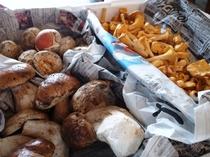 こだわりの食材 フランス産天然キノコ