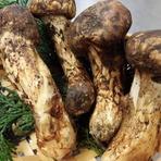 おすすめは9月上旬。短い季節の松茸料理をご賞味ください