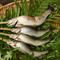天然物にこだわった地元で採れるジビエ、鮎、鰻、松茸、きのこを