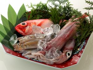 旬の魚介を堪能できる『本日の朝 とれたて鮮魚』