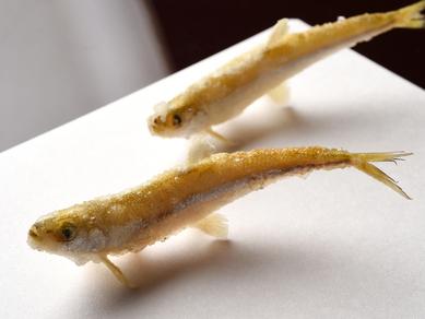 天ぷらというより魚そのものが泳いでいるような『ワカサギ』