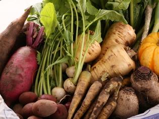 主に北海道産の旬野菜をふんだんに仕入れています