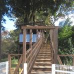 ツリーハウス階段手前