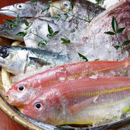 毎朝獲れたての地魚を中心に、地場産の食材にこだわって料理を提供。また和歌山の地酒も豊富に取り揃えるなど、こだわりある日本酒を楽しめることも魅力です!