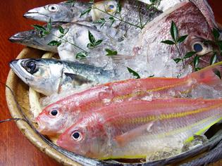 鮮度にこだわりあり!毎朝漁港から仕入れる新鮮な魚
