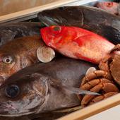 各地の漁港から直送で届く、朝獲れの旬の魚介類