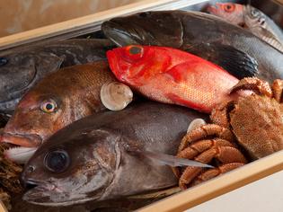 当日の朝に買付、漁港から直送で届く旬の魚介類