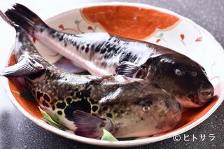 活魚料理 いか清 本店の料理・店内の画像2