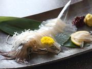 活魚料理 いか清 本店