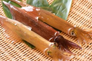 活魚料理 いか清 本店の料理・店内の画像1