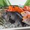漁港直送の新鮮鮮魚