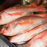 旬の魚介など自然に与えられたおいしさは、いかにその魅力を引き出すかがテーマ。たとえば脂ののった「ノドグロ」は網焼きにして、シンプルなソースを合わせます。